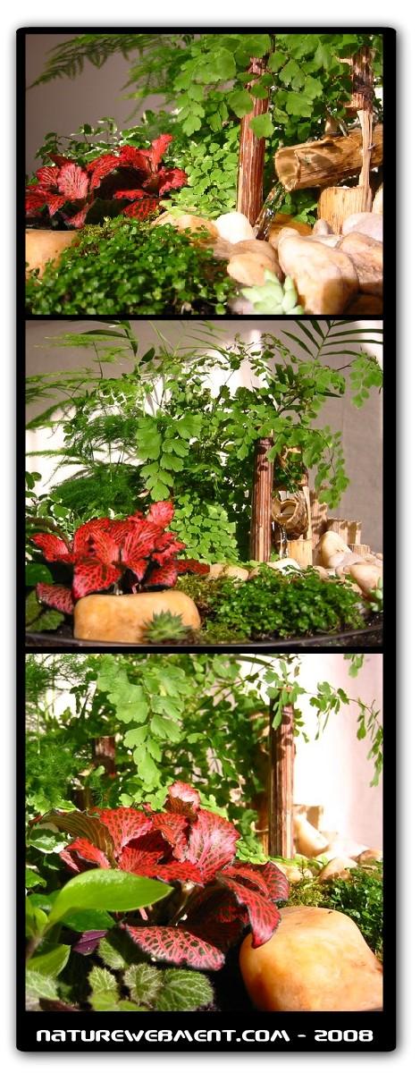 Petit jardin d 39 int rieur - Petit jardin public nice ...