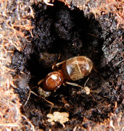 20100222_fourmis4_blognature.jpg