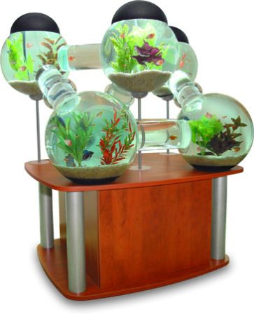 Des aquariums originaux for How to take care of fish tank