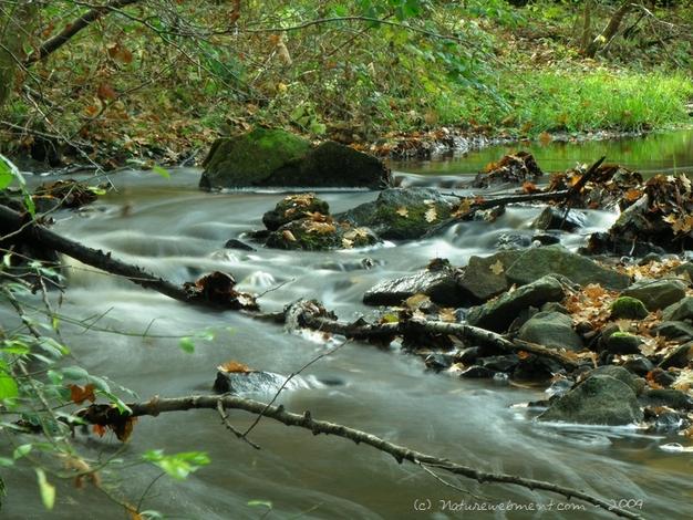 Ruisseau-de-Vergne-Labouesse-Villeclos-26-10-08-100_1.jpg