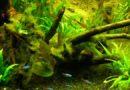 Démarrage d'un bac : fermentation, algues filamenteuses vertes,…