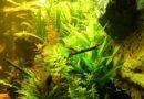 Vidéo et photos d'un aquarium de 450 L