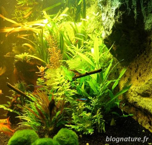 Aquariophilie archives for Aquarium ouvert