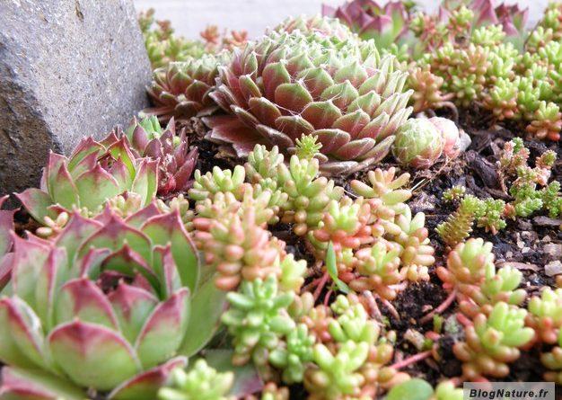 Petit jardin Zen pour le balcon - BlogNature.fr