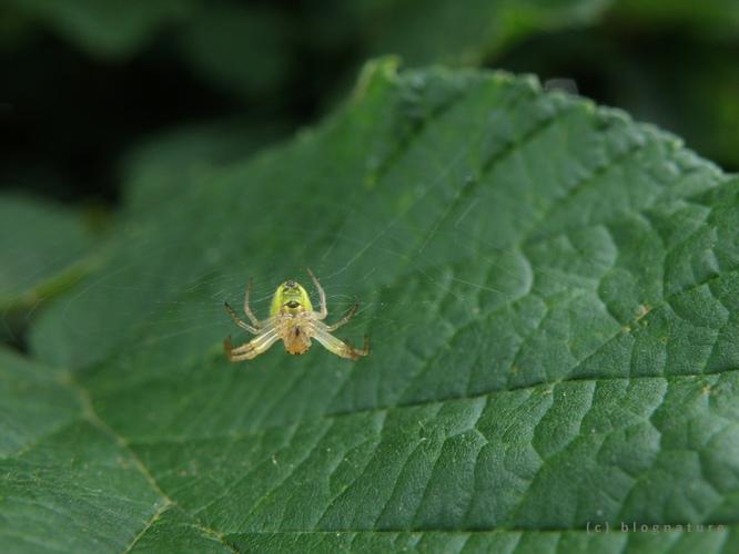 Araignée suspendue à sa toile