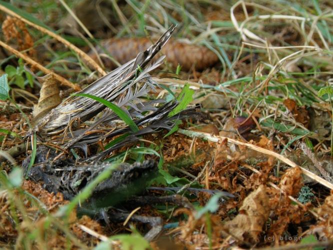 Restes d'un oiseau dans les bois