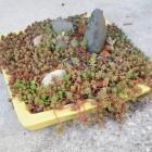 Petit jardin zen V²