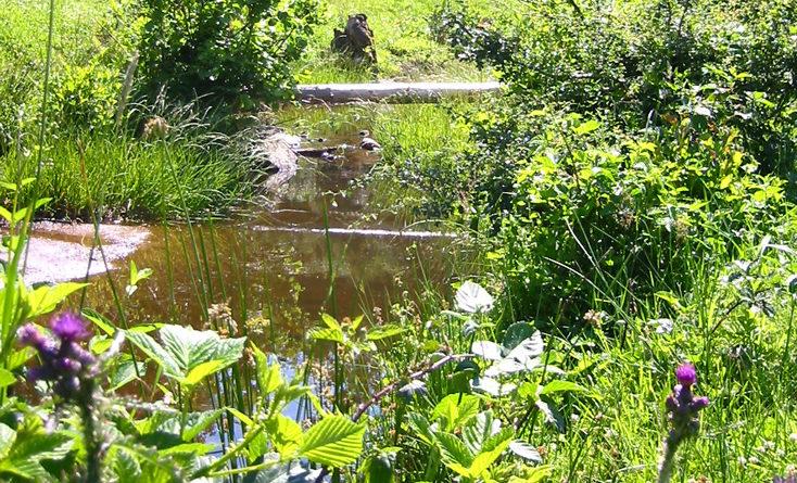 Gestion de l\'eau au jardin : un bassin sans pompe ni filtre, c\'est ...