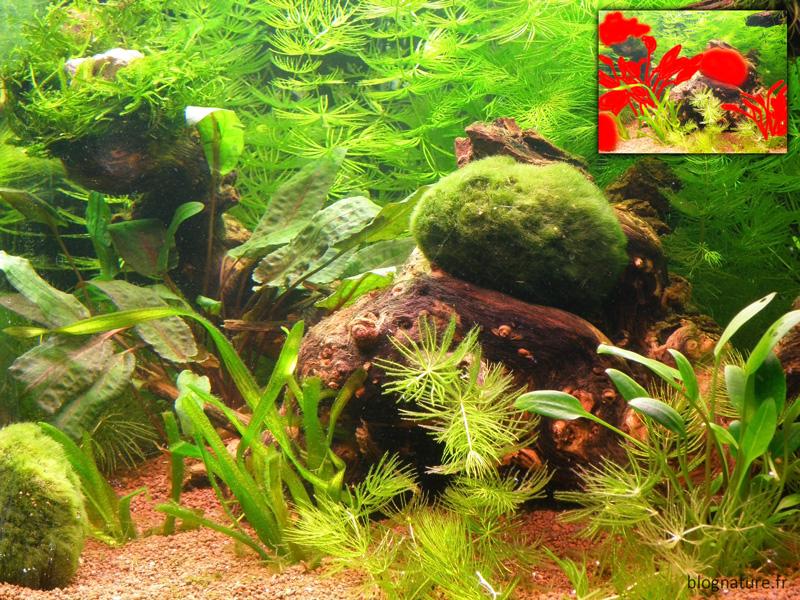 Aquarium paysager Blognature