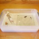 9. Installation d'une jeune colonie de fourmis