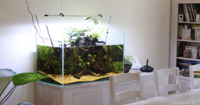 aquarium_ouvert_low_tech_blognature
