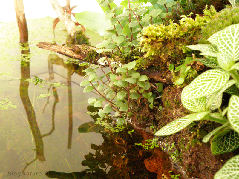 Aquarium ouvert lowtech blognature 118 for Aquarium ouvert