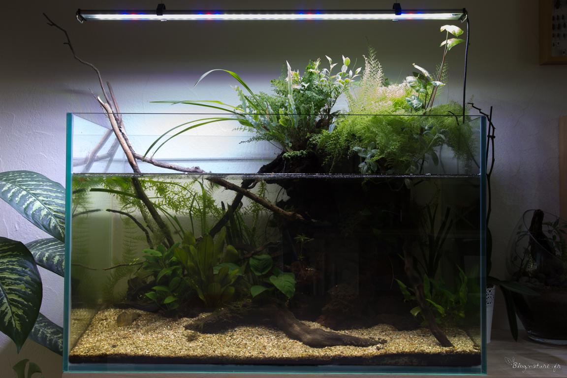 Aquarium ouvert 1 an 1 2 apr s for Aquarium ouvert