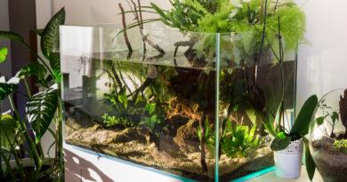 Aquarium ouvert… 1 an 1/2 après.