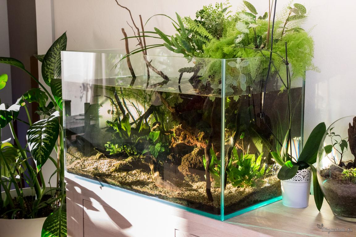 plante aquatique qui nettoie l'eau