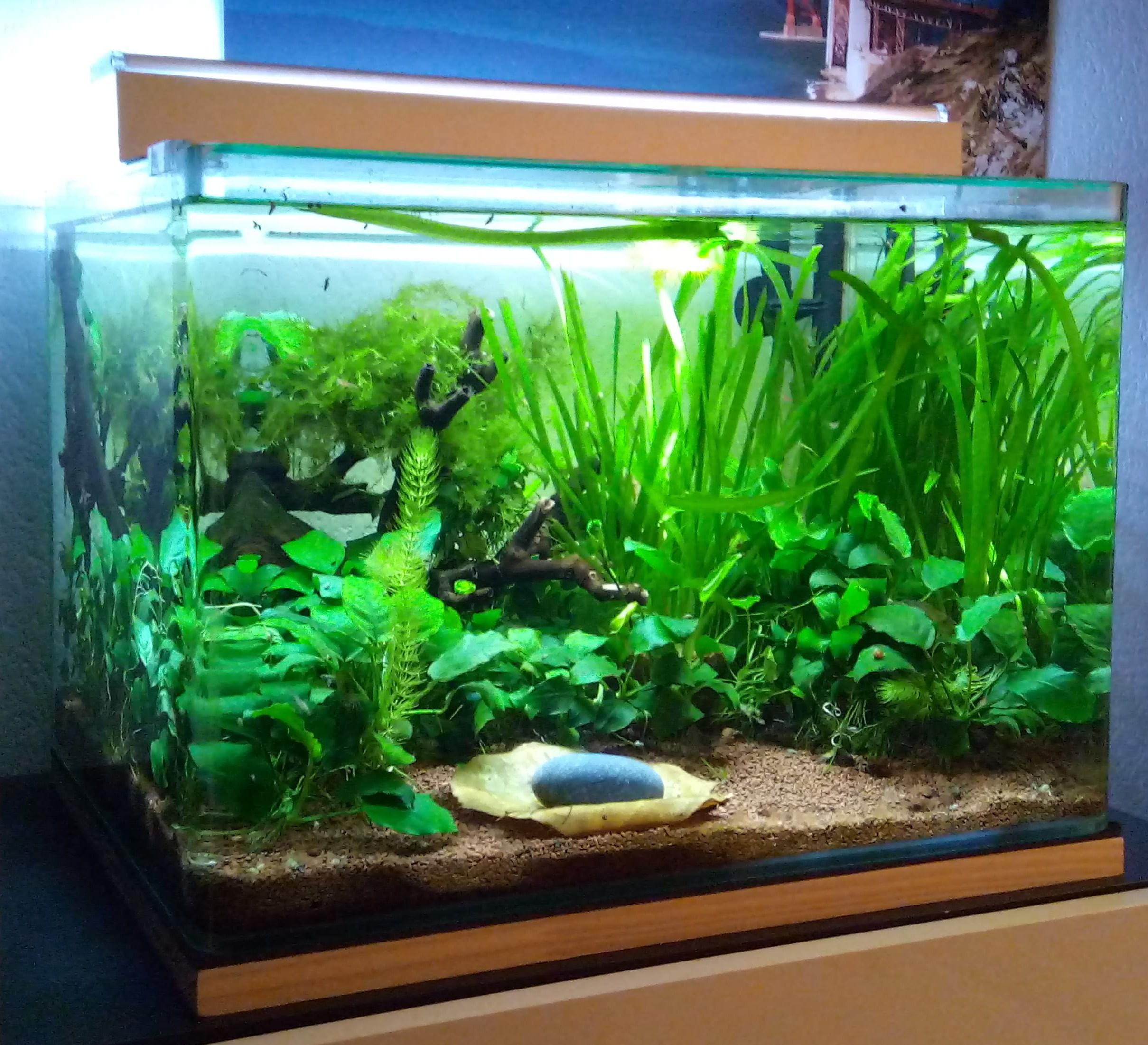 faire son engrais maison pour aquarium ventana blog. Black Bedroom Furniture Sets. Home Design Ideas