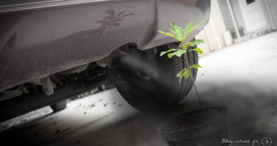 planter arbre impact carbone