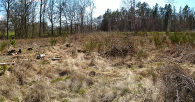 Expérience : acheter un terrain agricole pour protéger une forêt, planter des arbres et recréer une zone humide.