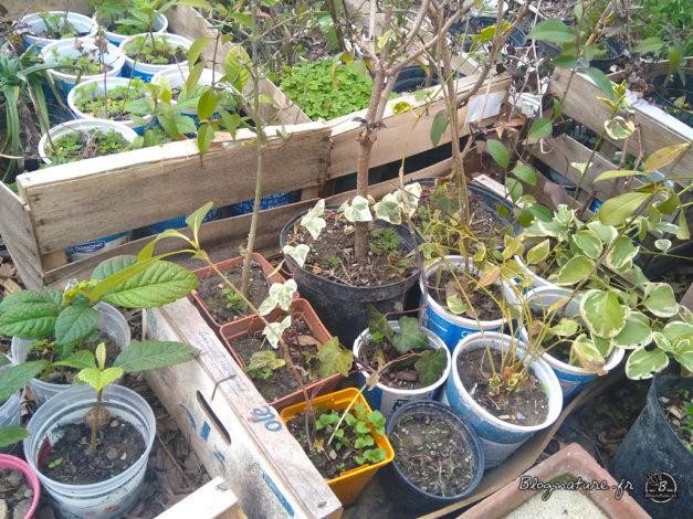plants en pépinière